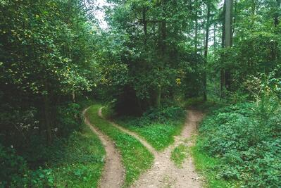 two pathways through the forest