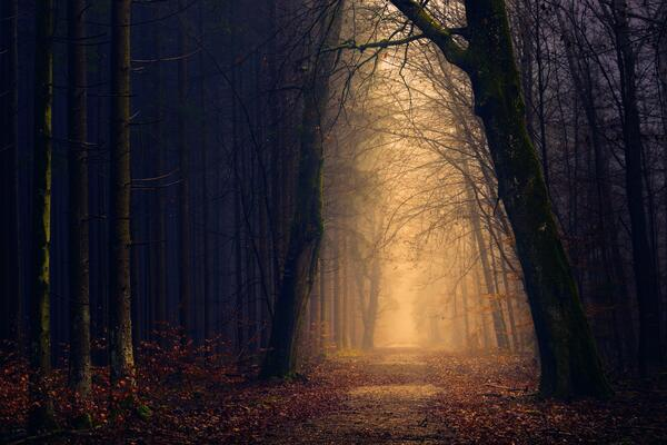 spooky wood with overhanging trees and mist